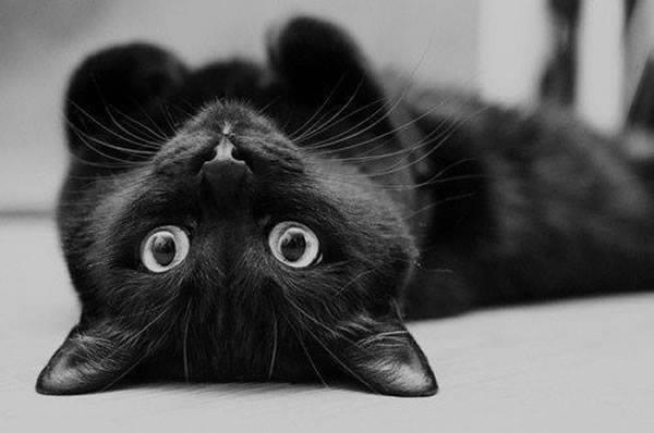 CAT love?