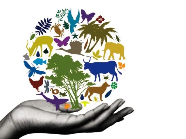 Biodiversity img src: http://businessbiodiversity.in/wp-content/uploads/2015/07/diversity.jpg