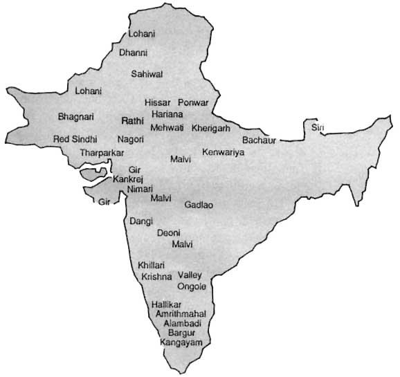 Indian Cows (http://www.fao.org/docrep/V0600T/v0600T00.jpg)