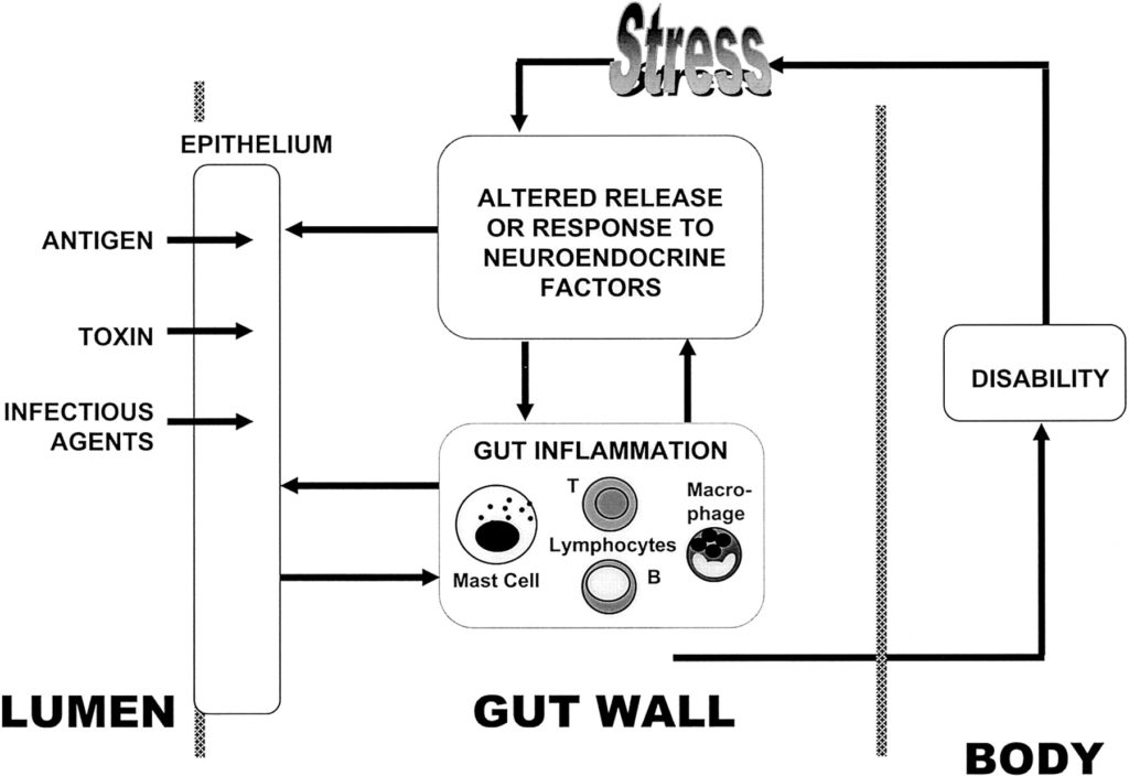 Potential impact of stress-induced intestinal barrier dysfunction on health.