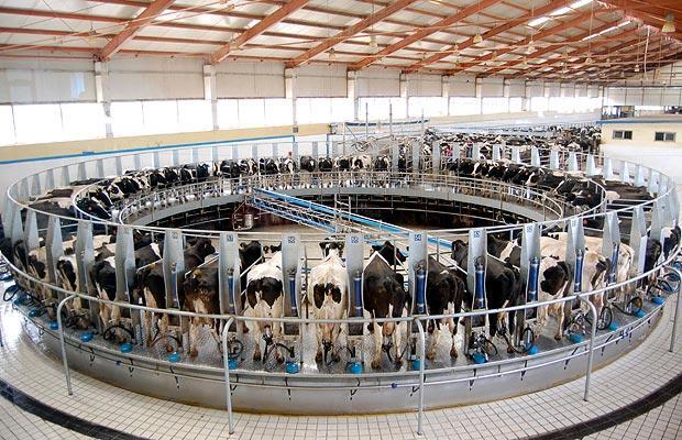 Slave#2 : Milk Machine  http://www.prijatelji-zivotinja.hr/data/image_3_7945.jpg