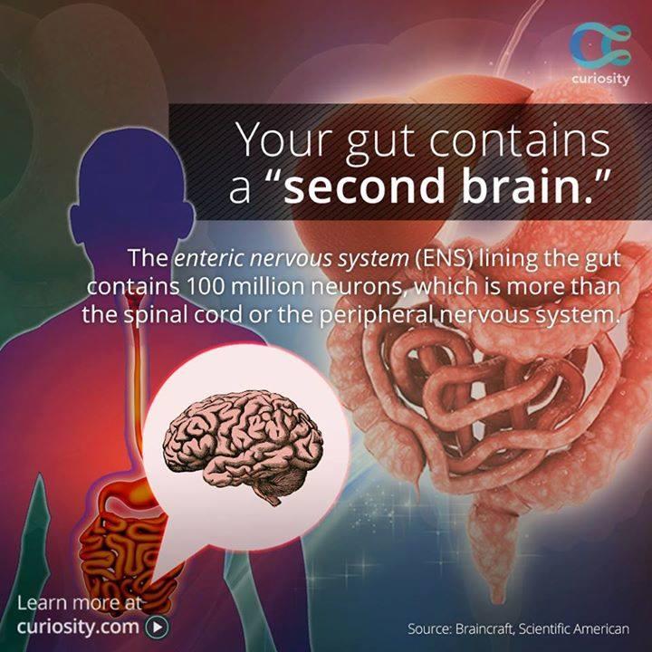 Gut - Second brain