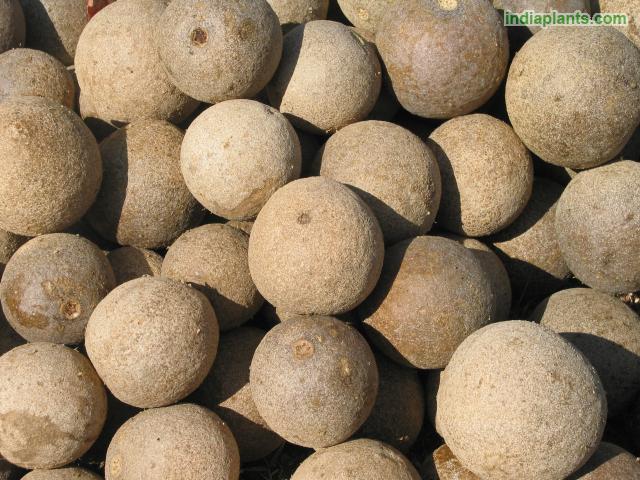 Kaitha - Indian fruit