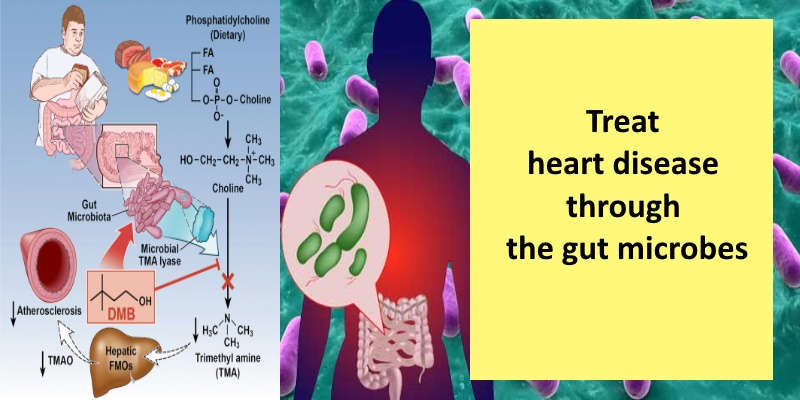 heartmicrobes