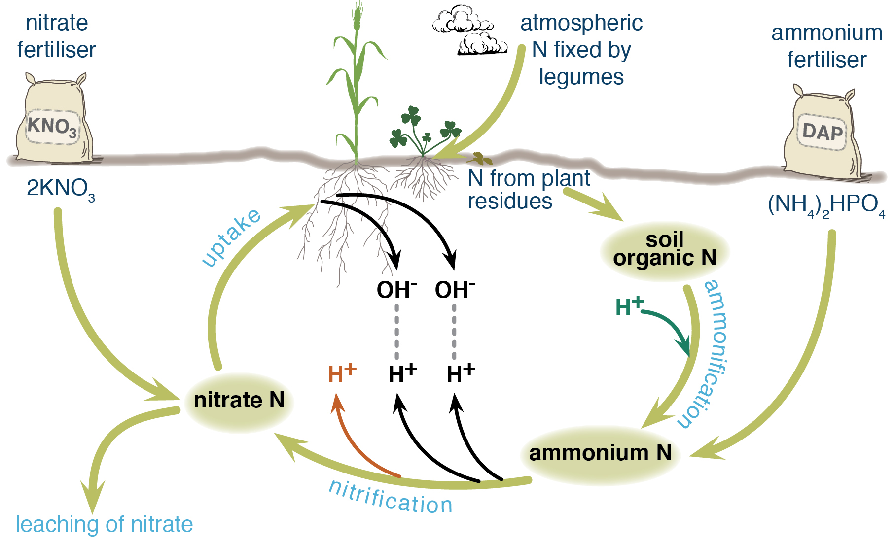 Soil acidity from N cycle_1