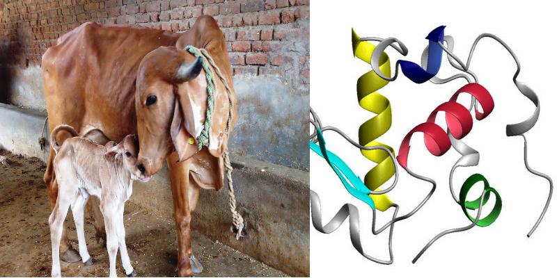 Cow Milk Cancer