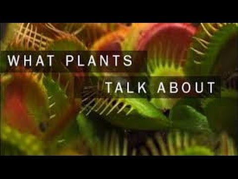 what-plants-talk-about-hd-full-documentary-youtube-14084133274g8nk