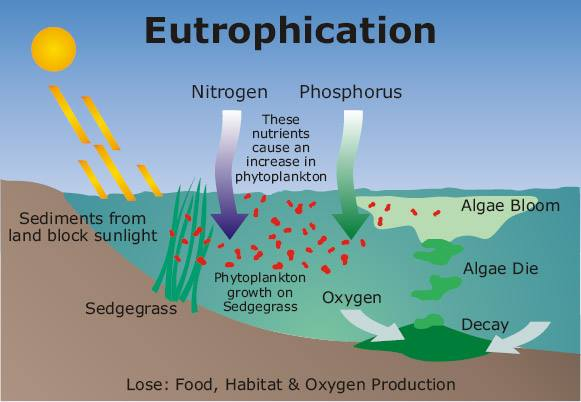 Eutrophication_1